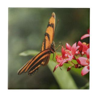 Azulejo da flor de borboleta