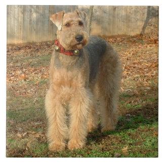 Azulejo da foto do cão de Airedale Terrier