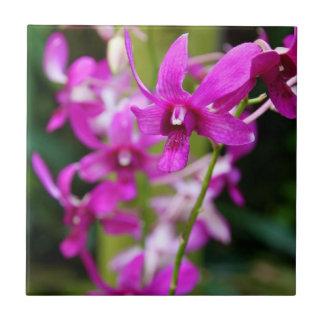 Azulejo da orquídea de Cooktown