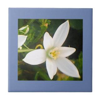 Azulejo de florescência branco do primavera