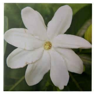 Azulejo de Tahitian Gardena