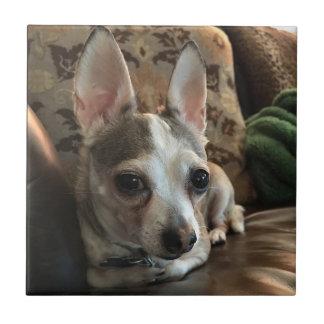 Azulejo do cão da chihuahua