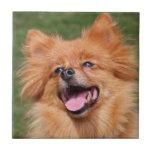 Azulejo do cão de Pomeranian ou trivet bonito, ide