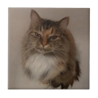 Azulejo do gato de chita