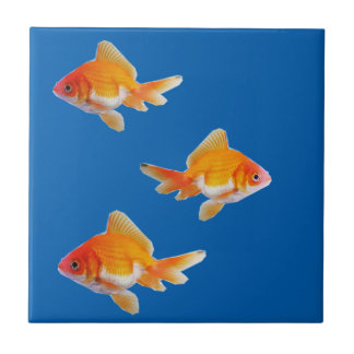 Azulejo do peixe dourado