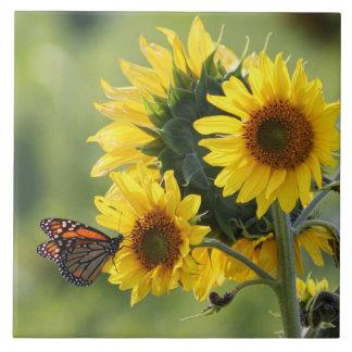 Azulejo dos girassóis do amarelo da borboleta de m