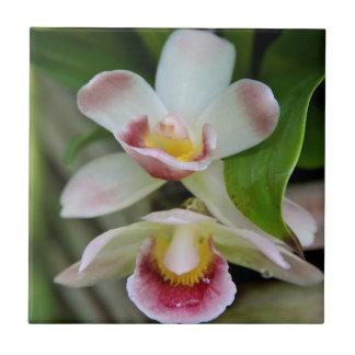 Azulejo em forma de leque da orquídea