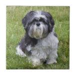 Azulejo ou trivet bonito bonito da foto do cão de