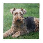 Azulejo ou trivet bonito da foto do cão de galês T