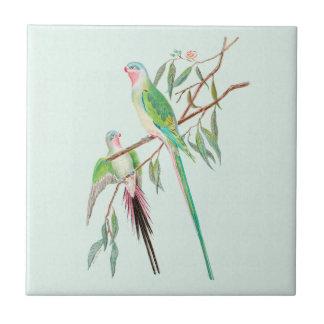 Azulejo Pastel do verde da aguarela dos pássaros