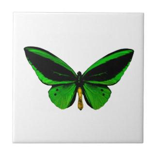 Azulejo verde da borboleta