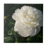 Azulejos dobro brancos ou Trivets das peônias