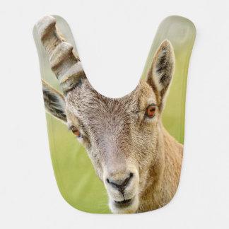Babador Retrato de um íbex