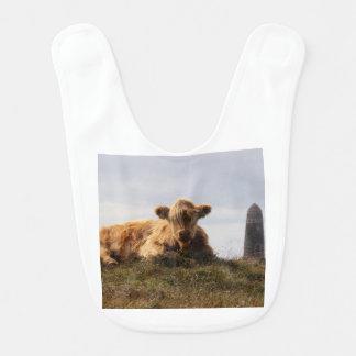 Babador Vaca de Luing na ilha de Islay, Scotland