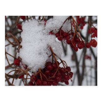 Bagas e neve vermelhas do cartão do feriado