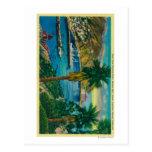 Baía de Avalon, ilha de Catalina do papai noel da  Cartao Postal