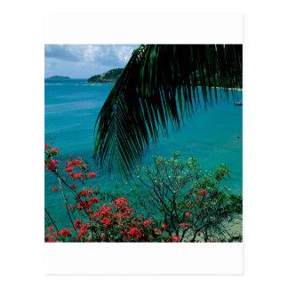 Baía tropical Bequia da amizade da ilha Cartão Postal