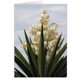 Baioneta espanhola na flor cartões