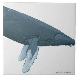 Baleia de Humpback