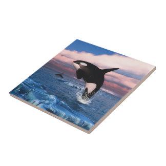 Baleias de assassino no oceano ártico