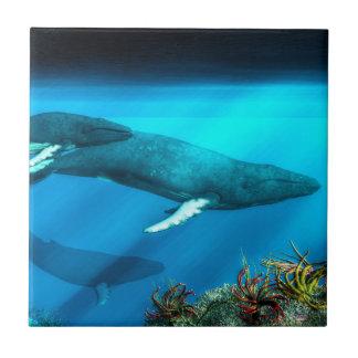 Baleias de Humpback
