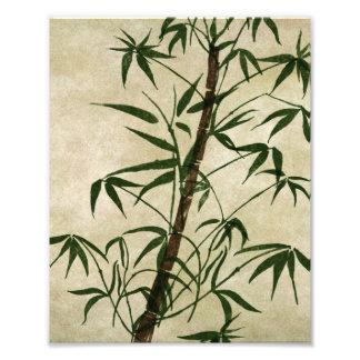Bambu oriental 1 do vintage impressão de foto