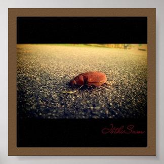 BANA o poster da foto do inseto do assassino