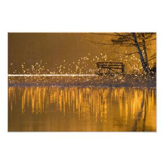 Banco só pelo lago na luz dourada foto