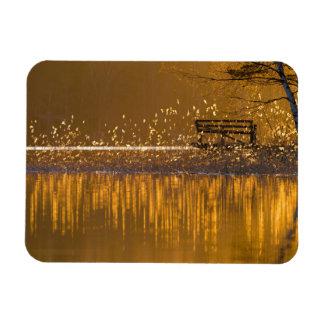 Banco só pelo lago na luz dourada ímã