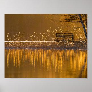 Banco só pelo lago na luz dourada poster