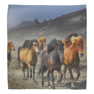 Bandana Cavalos selvagens