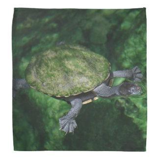 Bandana da tartaruga verde
