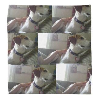 Bandana do cão de Molly