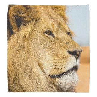 Bandana Leão grande que olha longe