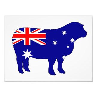 Bandeira australiana - carneiro impressão de foto