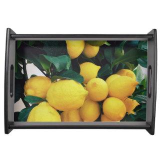 Bandeja Árvore de fruta do limão