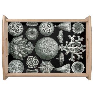 Bandeja Coral de Ernst Haeckel Hexacorallia