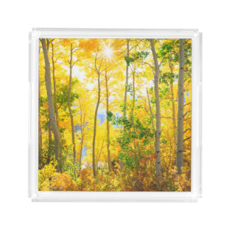 Bandeja De Acrílico Árvores de Aspen na serra montanhas da queda | de