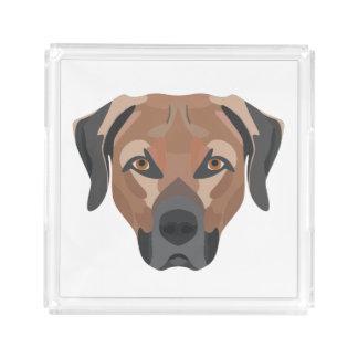 Bandeja De Acrílico Cão Brown Labrador da ilustração