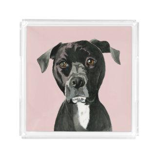 """Bandeja De Acrílico """"Contemplando"""" a pintura do cão do pitbull"""
