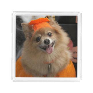Bandeja De Acrílico Filhote de cachorro Foxy de sorriso de Pomeranian