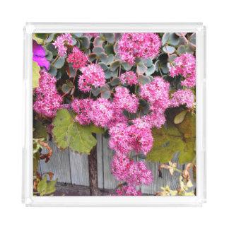 Bandeja De Acrílico Flores cor-de-rosa do Stonecrop do penhasco