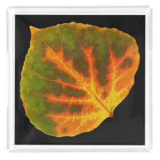 Bandeja De Acrílico Folha alaranjada & amarela verde #1 de Aspen
