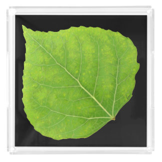 Bandeja De Acrílico Folha verde #11 de Aspen