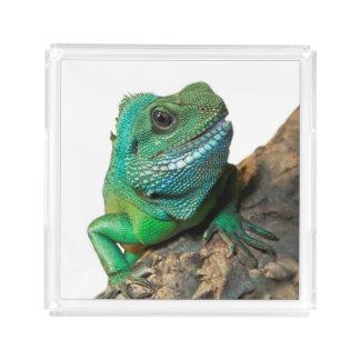 Bandeja De Acrílico Iguana verde