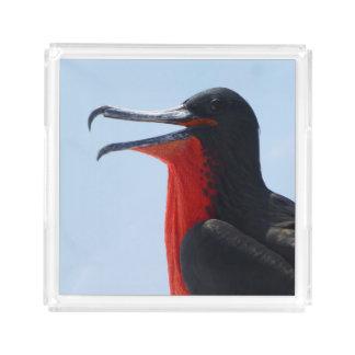 Bandeja De Acrílico Pássaro de fragata