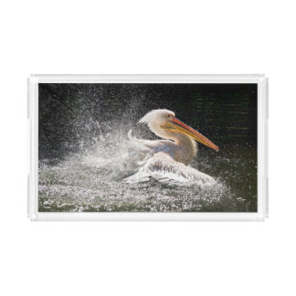 Bandeja De Acrílico Pelicano impressionante na água
