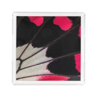 Bandeja De Acrílico Teste padrão da asa do detalhe da borboleta
