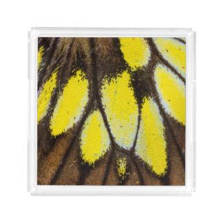 Bandeja De Acrílico Teste padrão da asa do Fim-acima da borboleta