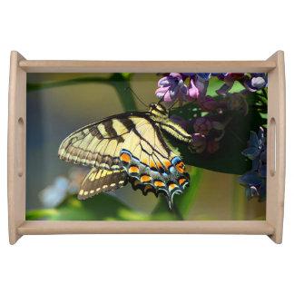 Bandeja do serviço da borboleta de Swallowtail do